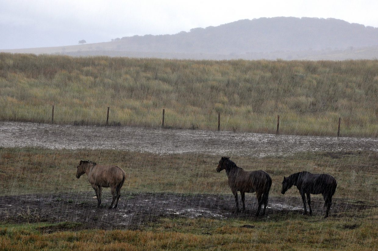 Horses weather a downpour Tuesday on a ranch off Twentymile Road.