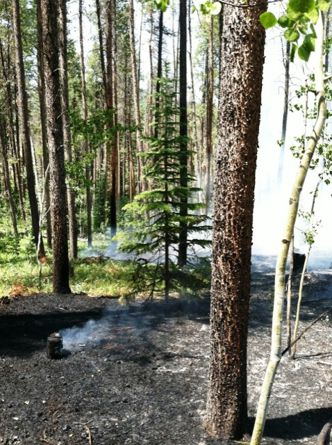 Oak Creek Fire was dispatched to a wildland fire near the intersection of Routt County roads 25 and 132A. District Chief Chuck Wisecup and two wildland engines from Oak Creek Fire Rescue responded and mutual aid was requested from Yampa Fire Department and the U.S. Forest Service.