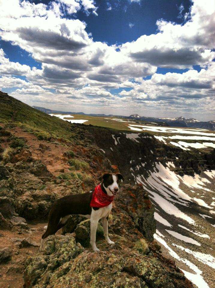 Gracie on Devil's Causeway on a beautiful Sunday afternoon. Submitted by: Maryedith Davies
