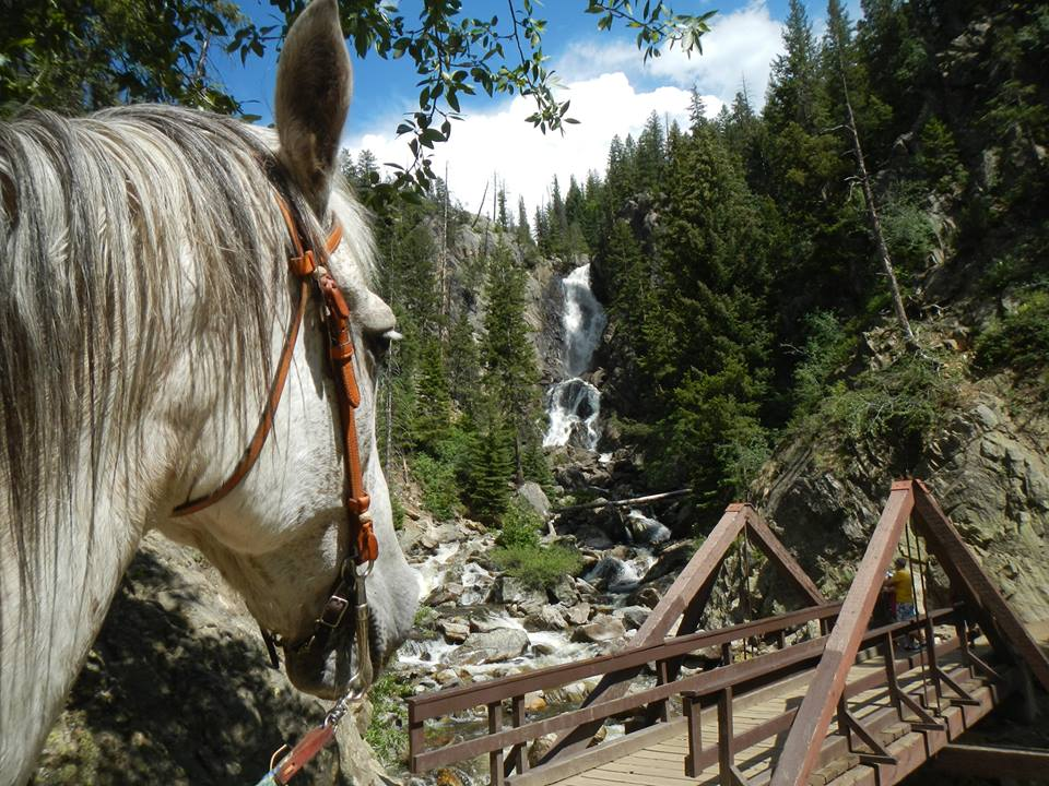 Hank the horse catching a view of Fish Creek Falls. Submitted by: Nancy Roberts