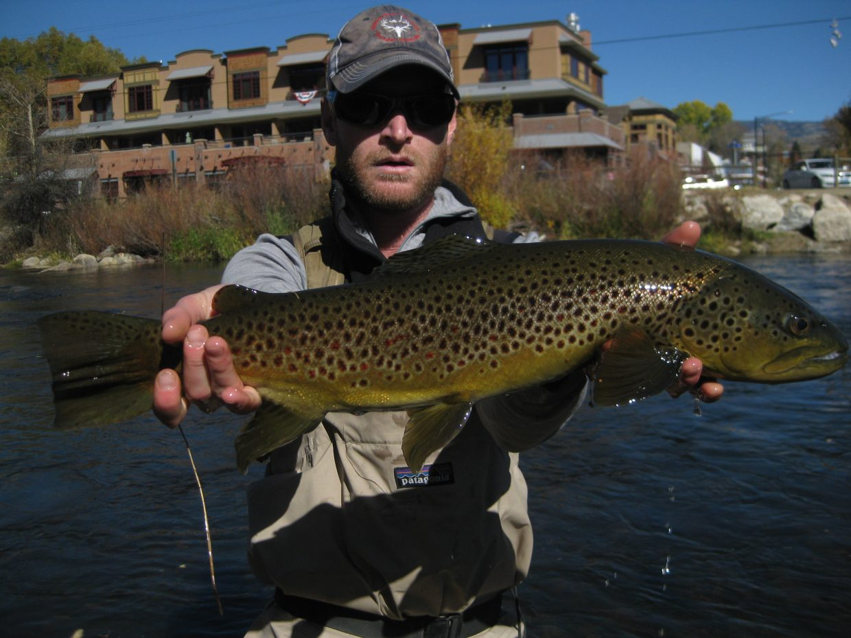 Jon Tucker with a real nice brown trout on the Yampa River in downtown Steamboat Springs.