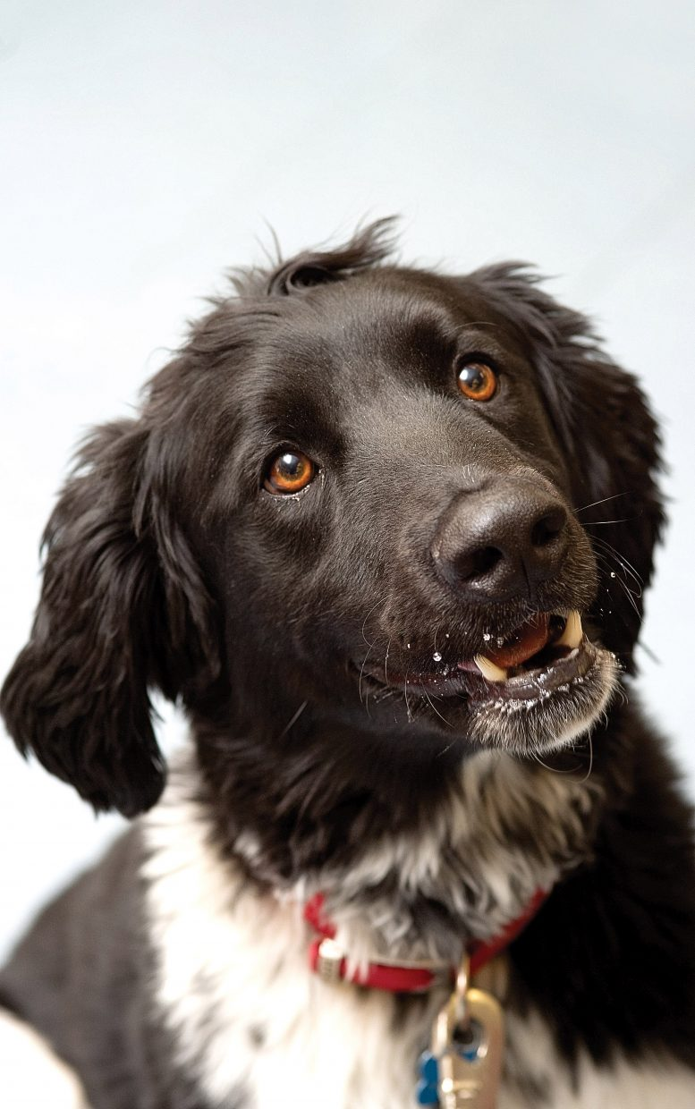 Dune is a border collie sheepdog mix with an acute sense of smell.