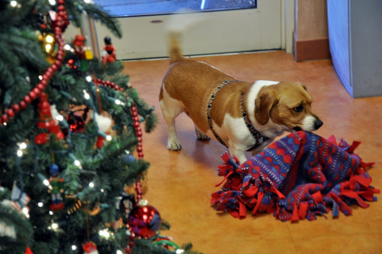 Doak Walker Care Center's dog Bruiser checks out the gift he received from Hayden Elementary School students Thursday.