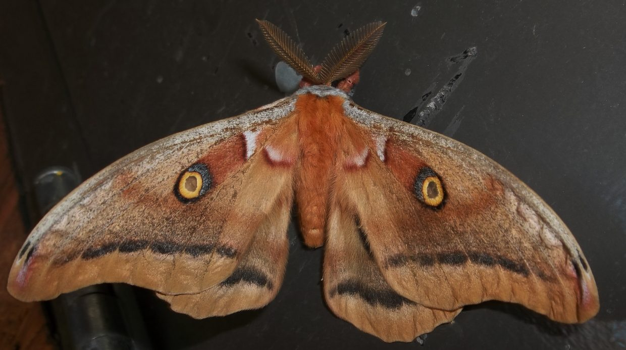 Moth visit. Submitted by: Bill Dorr