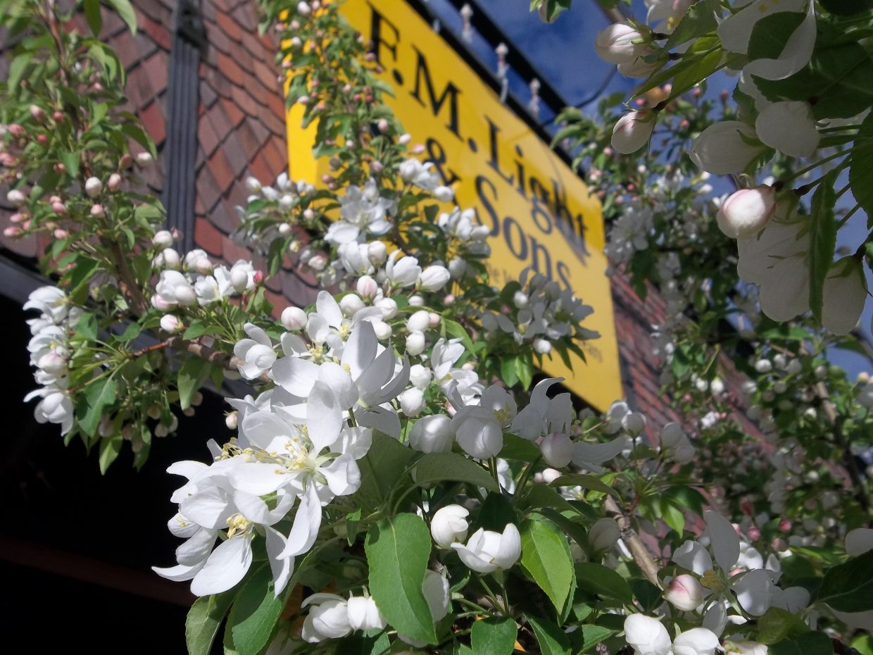 Main Street blooms. Submitted by: Bill Dorr