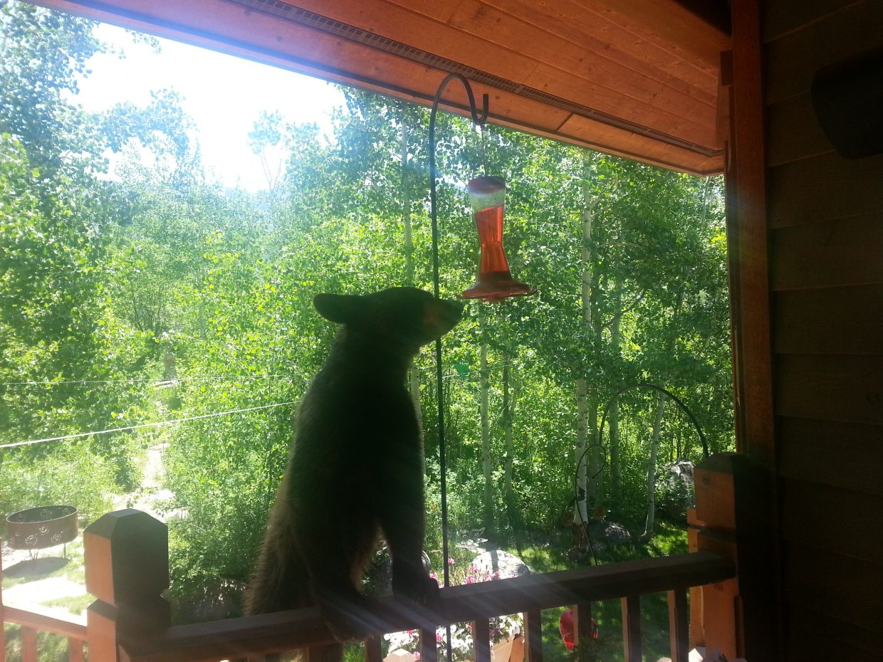 Bear at hummingbird feeder. Submitted by: Leslie Gamel