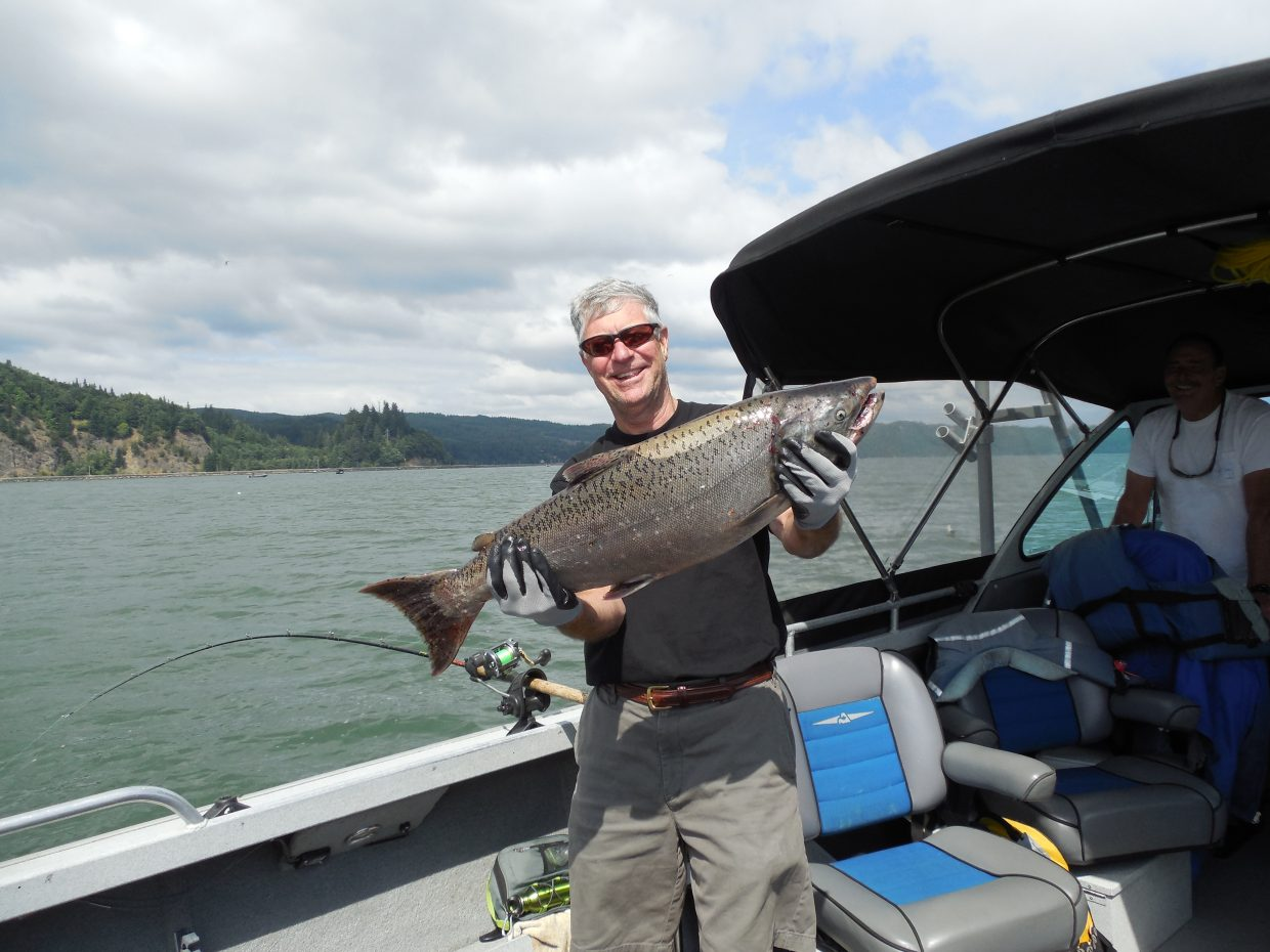 Chinook salmon caught in the Columbia River last week. Submitted by: Bruce Carlock
