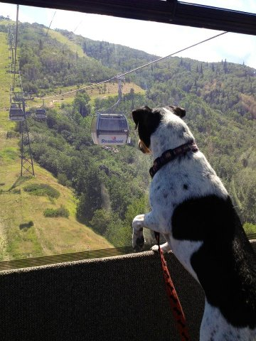 Molly Held riding the gondola to go for a hike on July 24. Submitted by: Janice Held