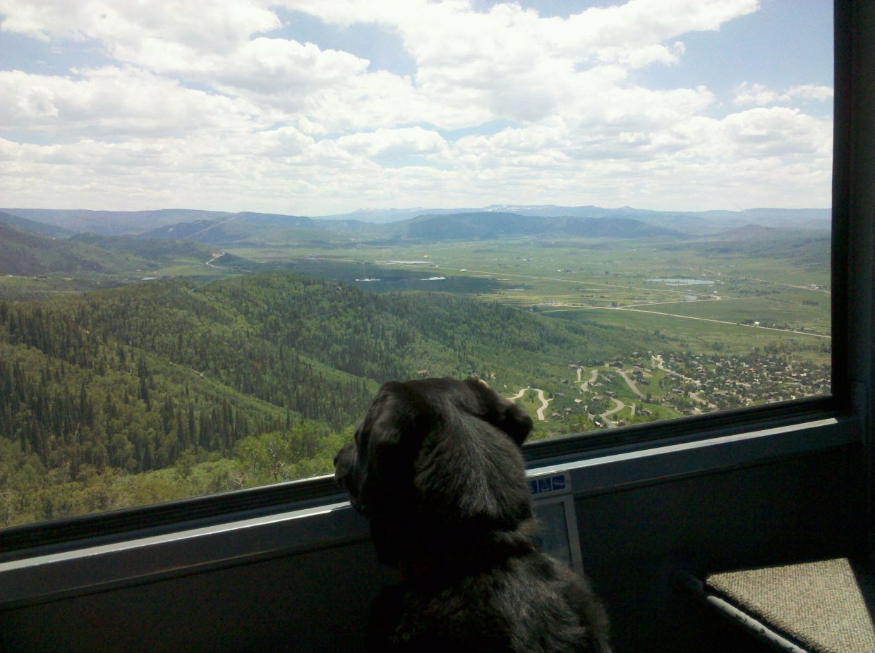 Nice hike down Valley View trail at Steamboat Ski Area. Submitted by: Cody Romine