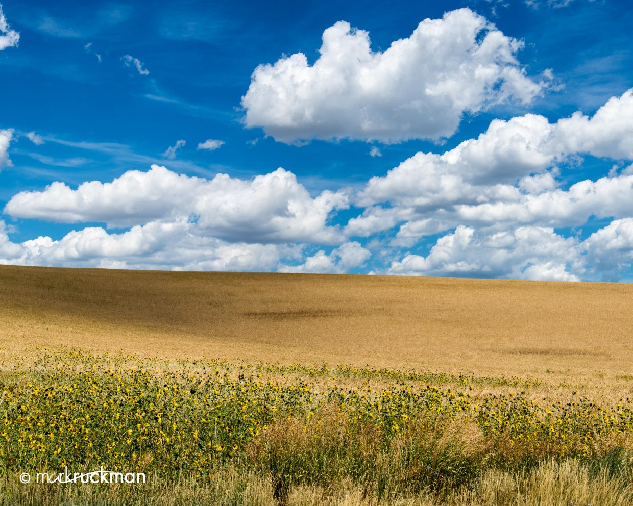 A wonderful sky over a wheat field near Hayden. Submitted by: Mark Ruckman