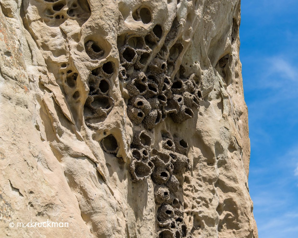 Cliff Swallow nest. Submitted by Mark Ruckman