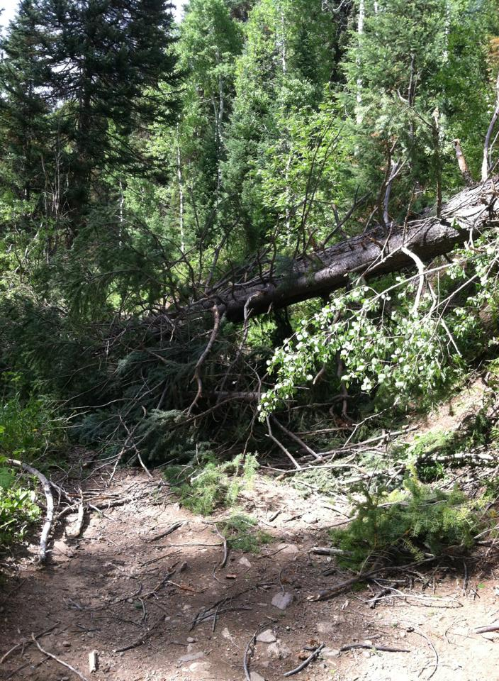 Microburst hits Spring Creek Trail. Submitted by: Maryedith Davies