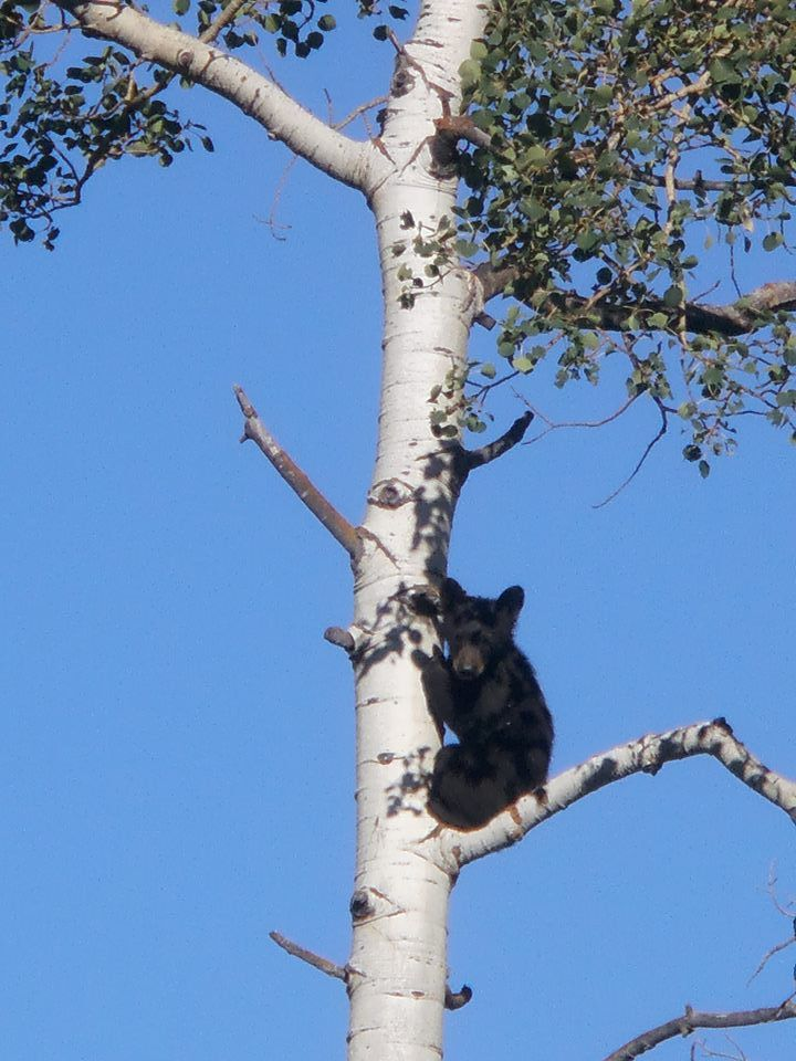 Black bear cub on the Mad Creek trail. Submitted by: Mary Boatwright