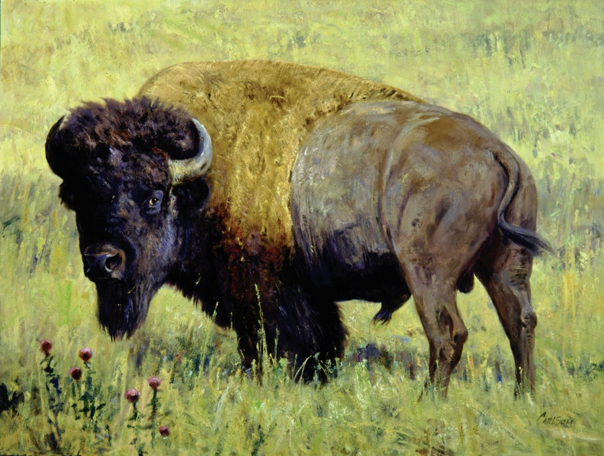 Paintings by wildlife artist Ken Carlson are featured this winter at Steamboat Art Museum. The show is the first public display of the paintings, which are from private collections.
