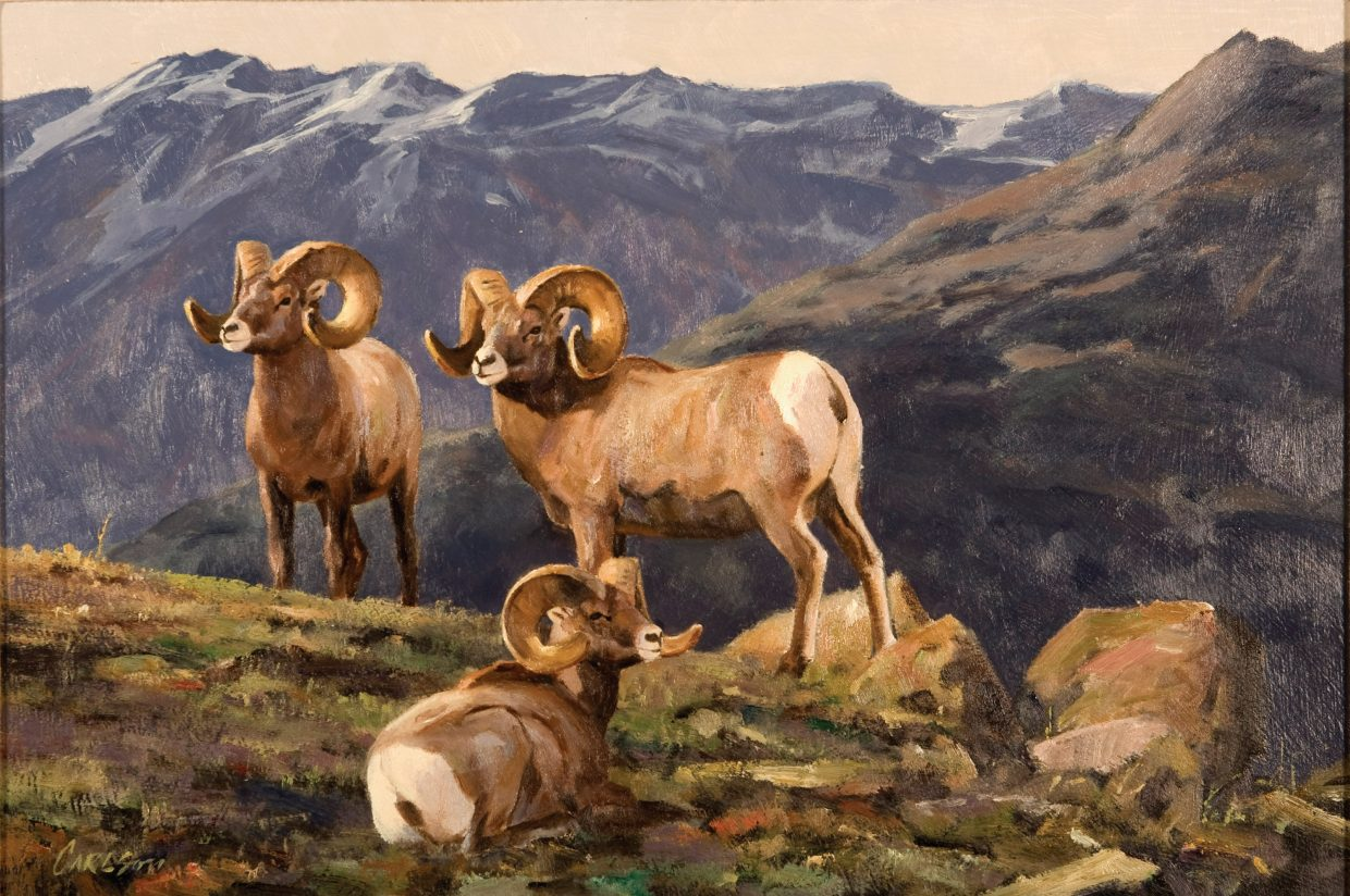Among the 44 paintings by Ken Carlson on display at the Steamboat Art Museum are depictions are different kinds of bighorn sheep.