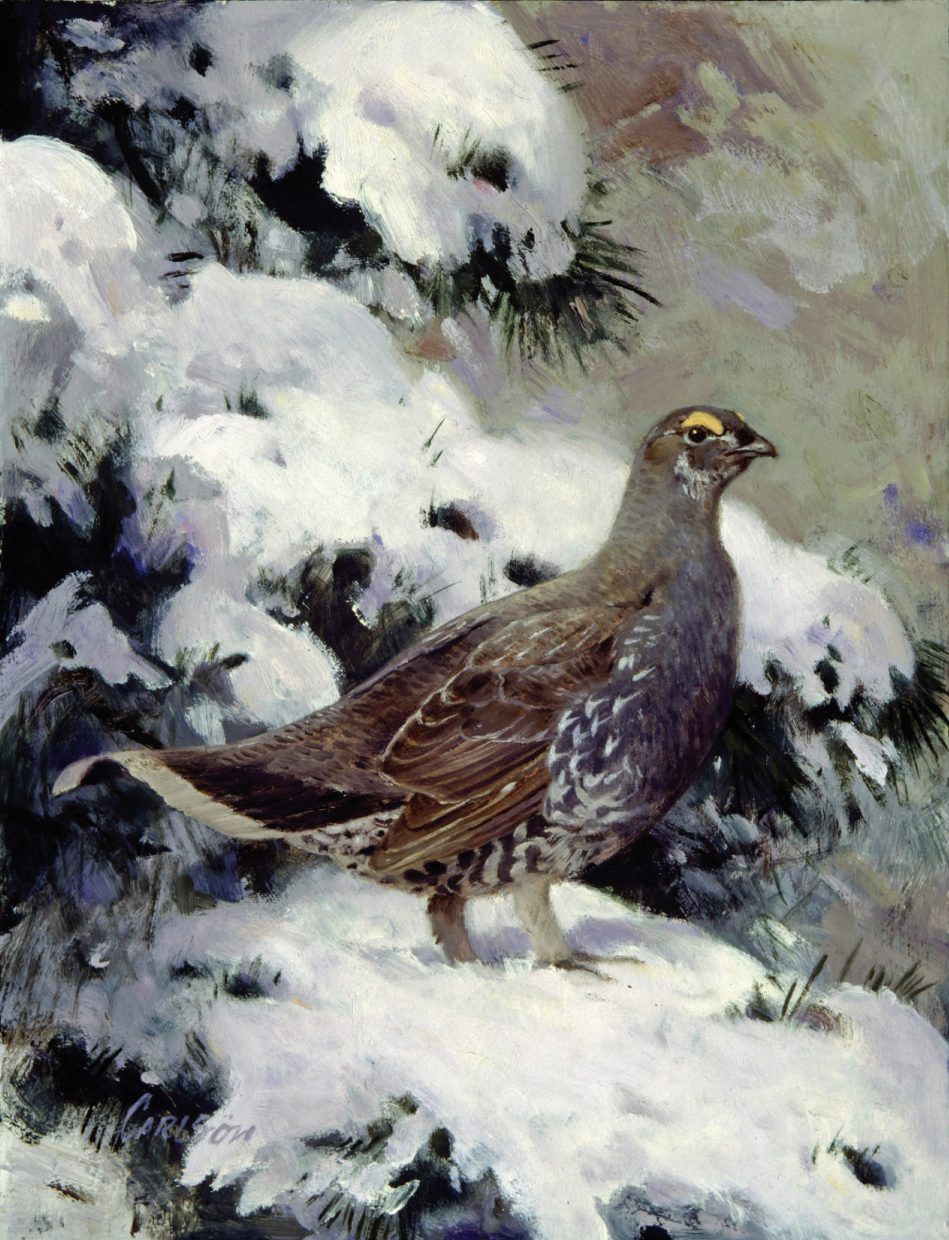 This painting of a grouse by Ken Carlson is one of three images of the types of that bird found in a show at the Steamboat Art Museum. Carlson's work is on display through April 10.