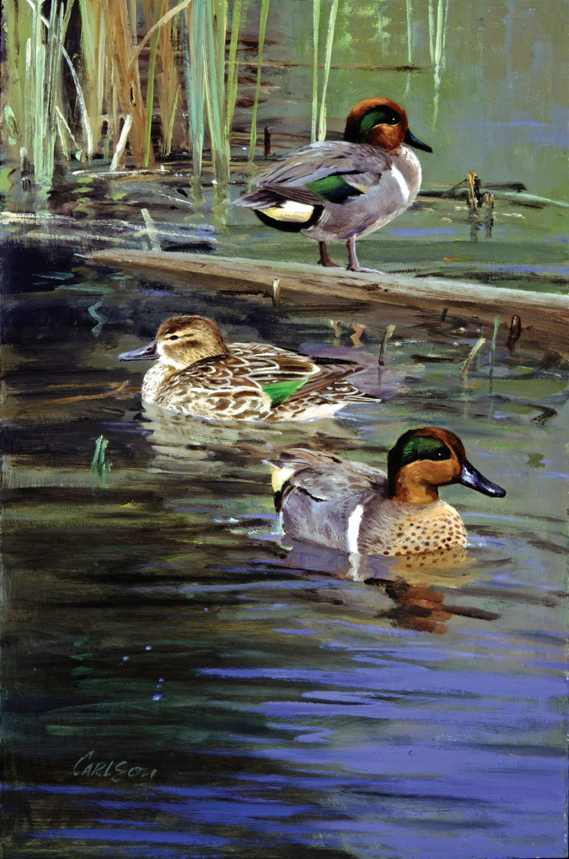 A painting of green-winged teal by wildlife artist Ken Carlson. The work is one of 44 pieces from private collections on display through the winter at the Steamboat Art Museum.