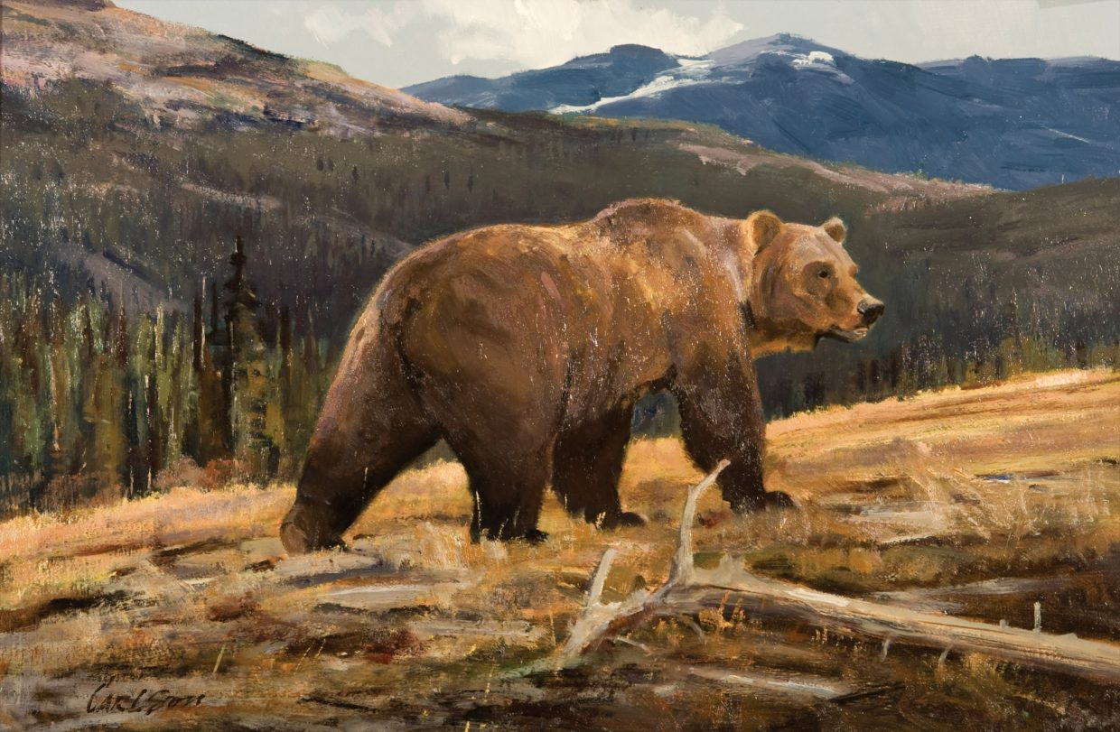 This depiction of a grizzly is one of 44 paintings on display through the winter at Steamboat Art Museum. The work, created by wildlife painter Ken Carlson, has never before been on public display.