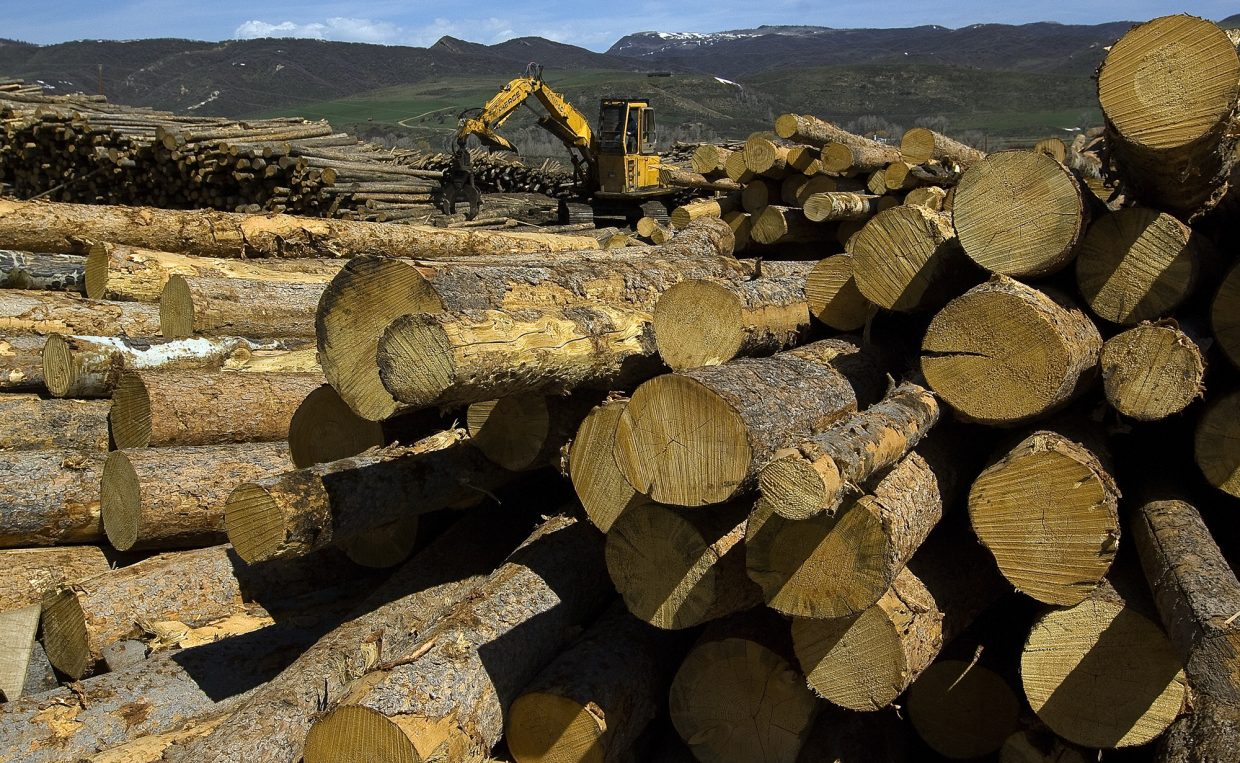 Heavy equipment moves recently cut trees at the More Lumber company near Milner. The owners say they are hoping to capitalize on the bark beetle epidemic by clearing, and putting the dead trees to a productive use. They say there will be more dead trees in the nearby forest than they can process at the plant.