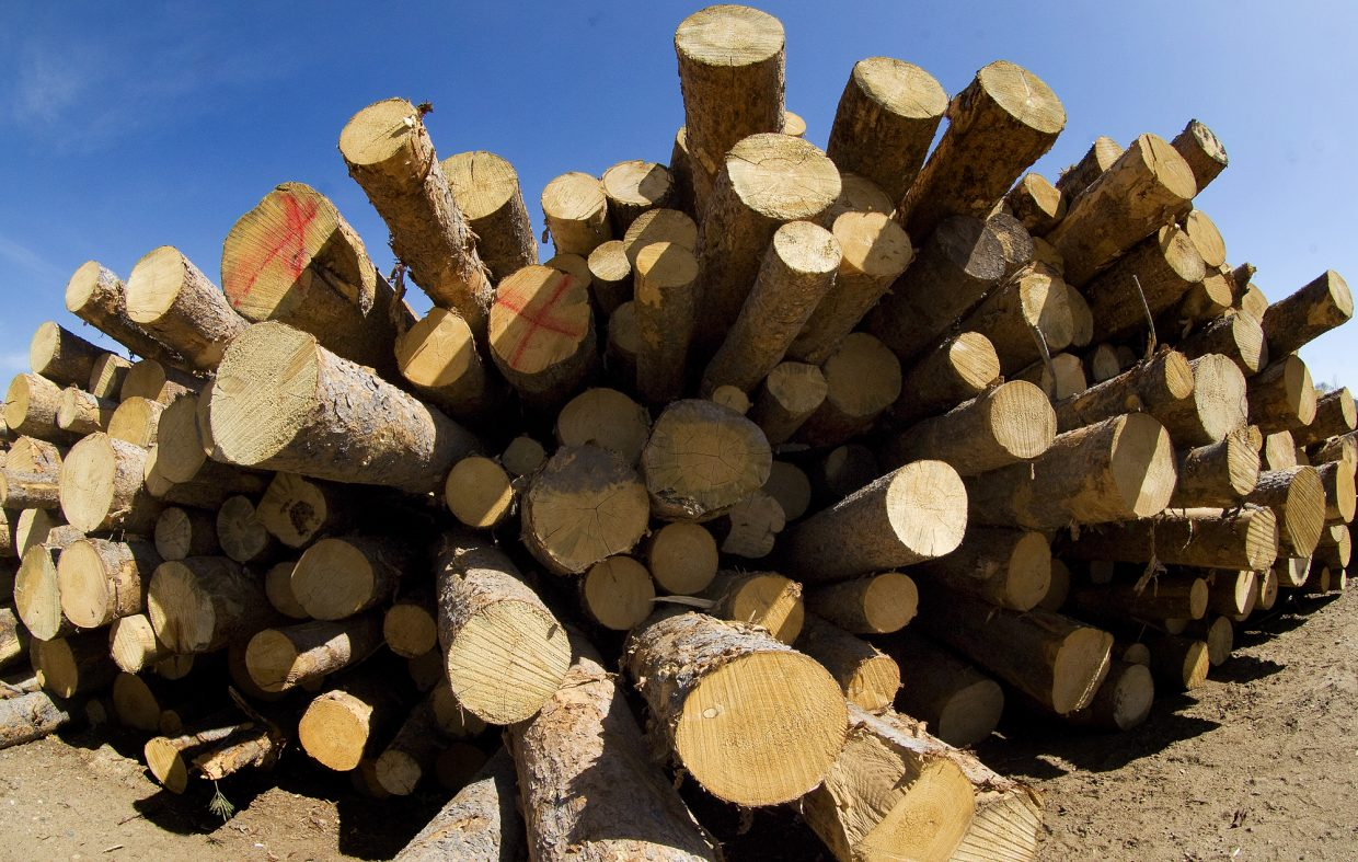 Logs wait to be milled at the More Lumber company near Milner. The owners say they are hoping to capitalize on the bark beetle epidemic by processing the lumber that is being cleared from nearby forests.