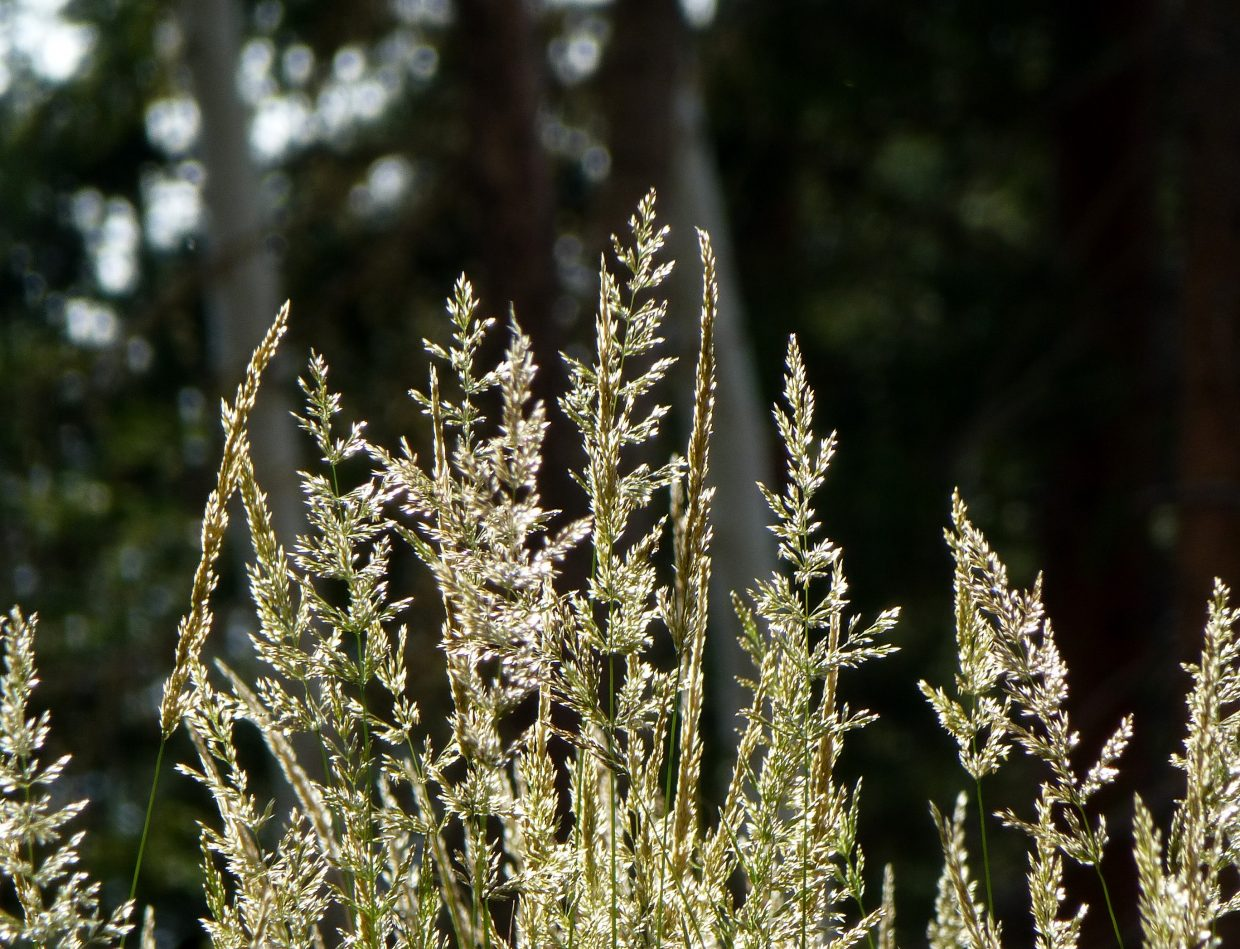 Backlit grass. Submitted by: Gail Hanley