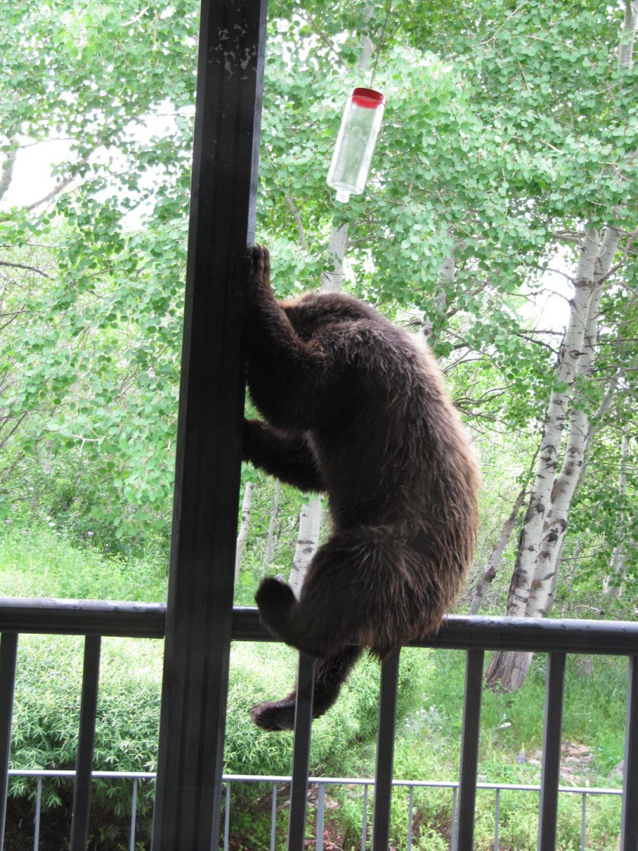 Bear at Steamboat Boulevard home. Submitted by: Lynn Reiff