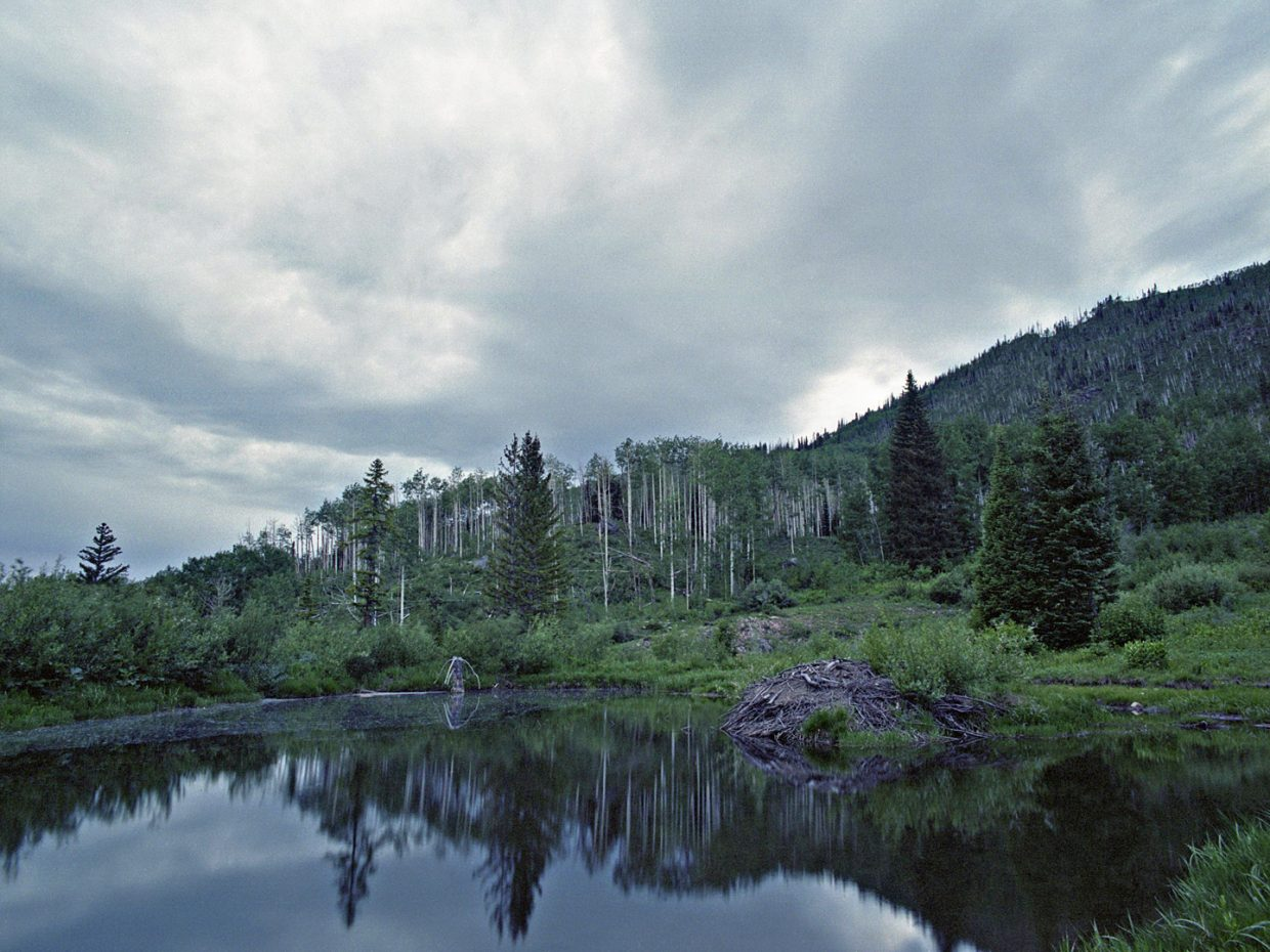 Beaver dam in the Mount Zirkel Wilderness Area. Shot with medium format color print film. Submitted by: Jeff Hall