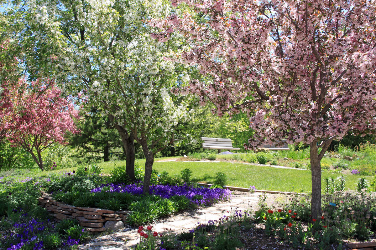 Flowering trees at the Yampa River Botanic Gardens. Submitted by: G. Fredric Reynolds