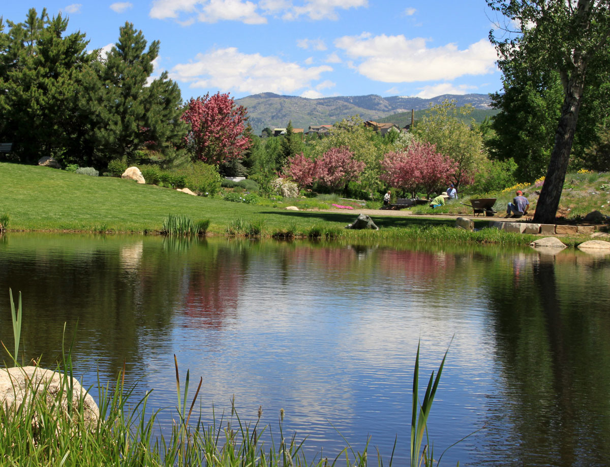 Taken during a stroll through the Yampa River Botanic Park on Wednesday morning. The flowering trees, and their reflections in the pond, were delightful to behold. Submitted by: G. Fred Reynolds