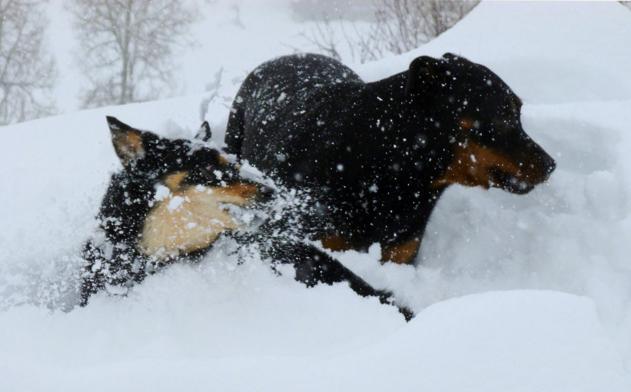 Casper and her friend Reese loving the powder. Photo submitted by Allison Keating
