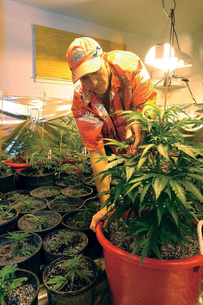 Aloha's owner Chris Ward tends to marijuana plants in the grow room of his medical marijuana center in Milner, which opened July 4.