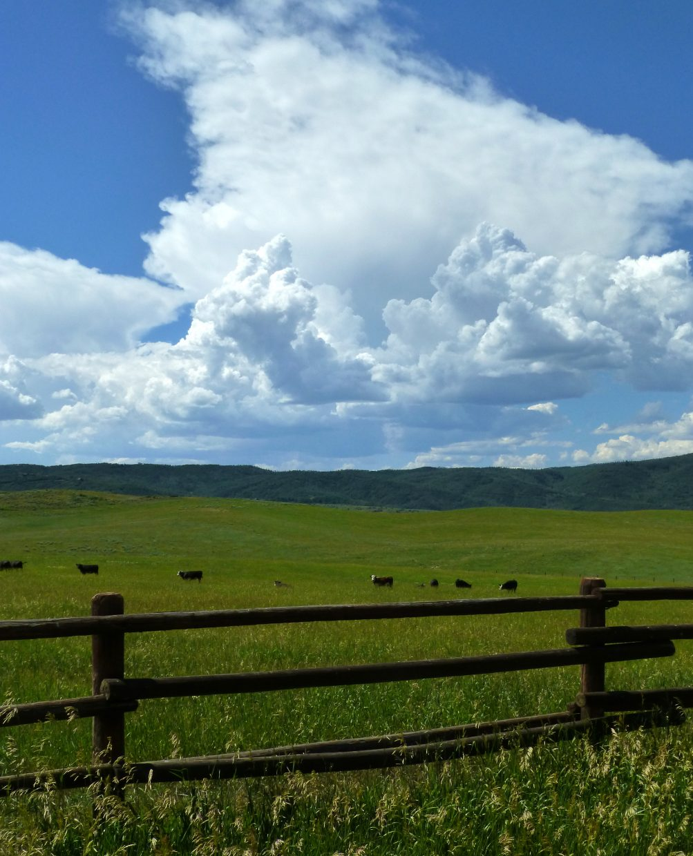 Cows and thunderheads at Sidney Peak. Submitted by: Gail Hanley
