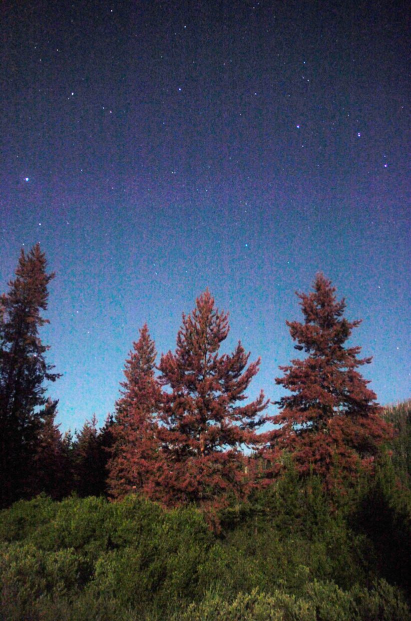 Dead lodgepole pines glow in the moonlight in North Routt County.