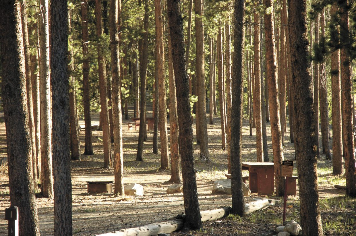 Sun shines through the pines at Lodgepole Campground in Gunnison National Forest.