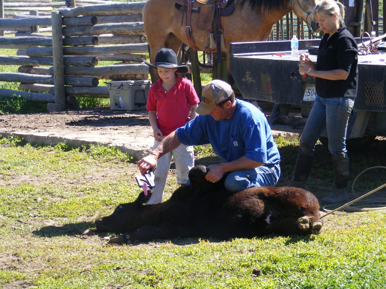 Chad Bedell teaching his son Tim how to tag a calf's ear. Submitted by: Molly Ray
