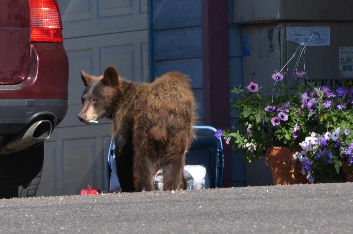 Snack time in the Blue Sage neighborhood. Submitted by: Don Ciavarra