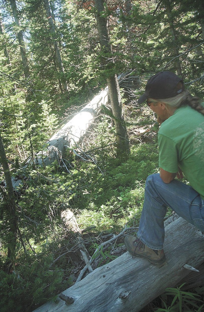 John Anarella examines what remains of the spruce trees that were killed during the spruce beetle epidemic in the Flat Tops Wilderness Area 50 years ago.