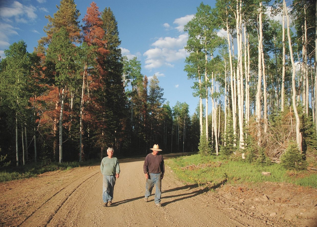 Jim Burton, right, and his neighbor Ron Willhide walk along a road in their Red Creek subdivision in North Routt County. The area to the right of the road was logged to get rid of mature and infested lodgepole pine trees. The area to the left of the road has not been logged.