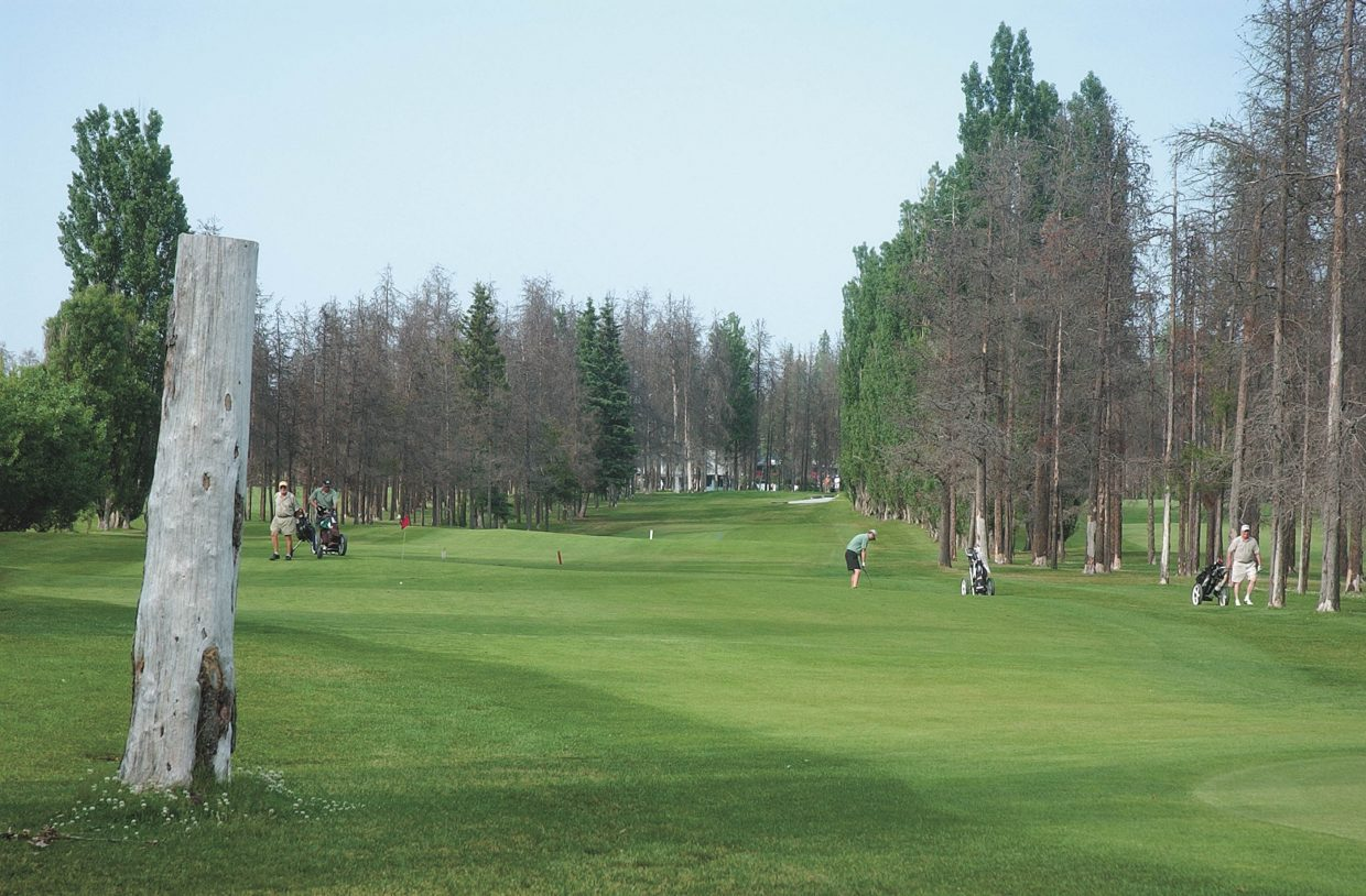 The Prince George Golf and Curling Club, in British Columbia, Canada, had some infected lodgepoles removed.