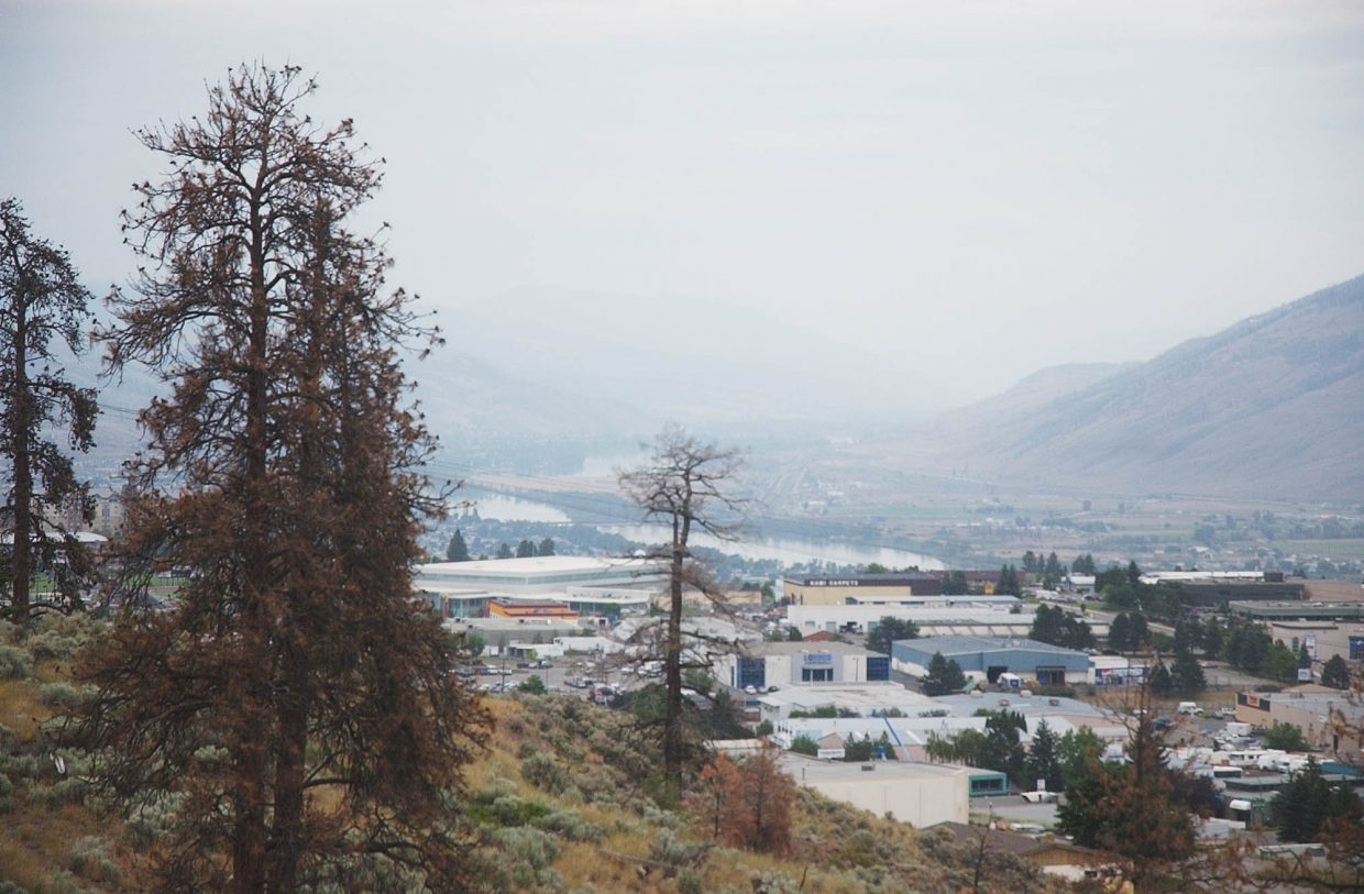 Dead lodgepole pine spot the landscape in the high-desert city of Kamloops.