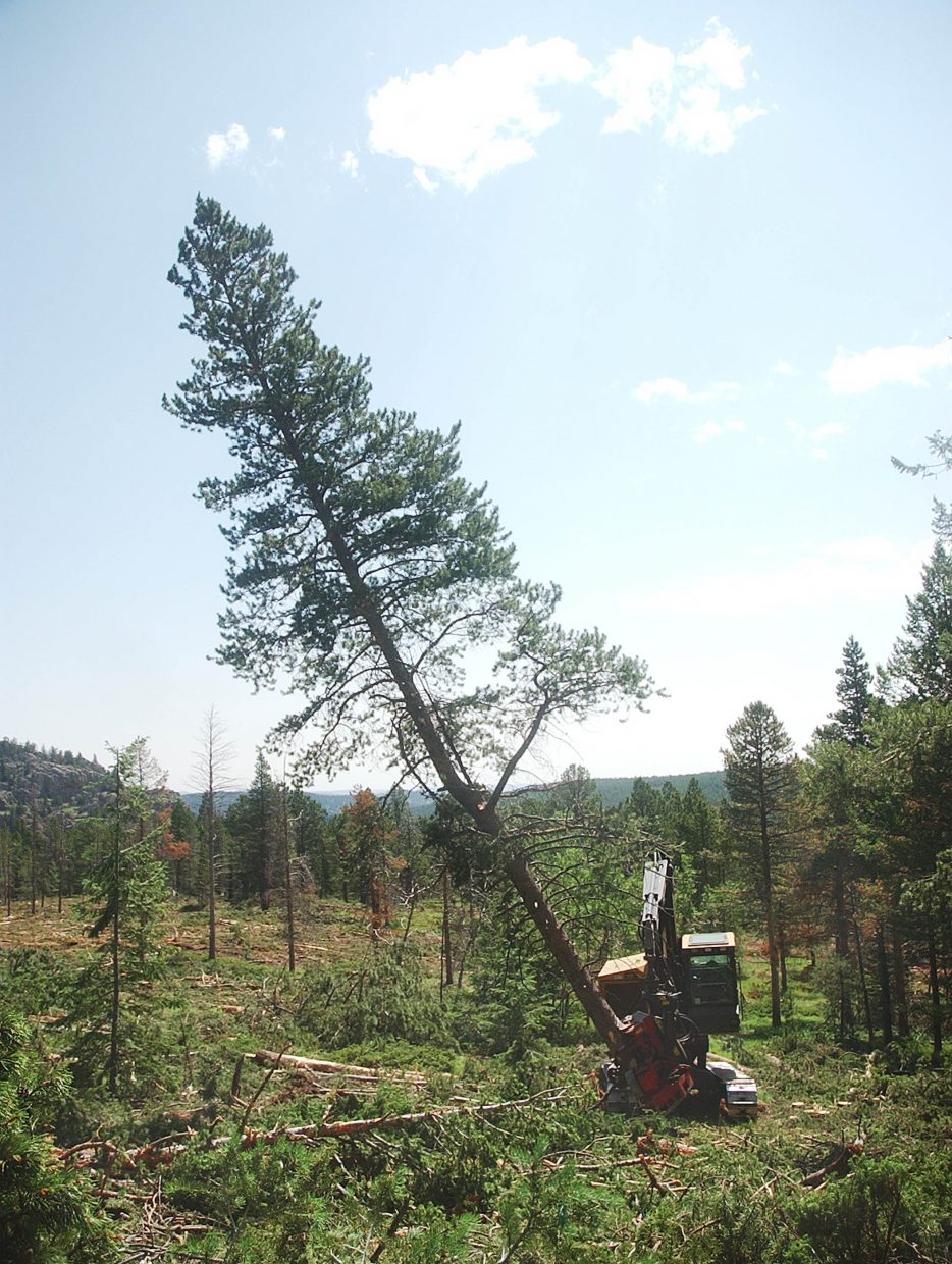 Beau Heggie, with Heggie Logging, uses a harvester to cut down a lodgepole pine.
