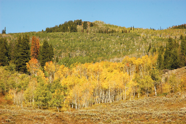 Fall returns to the Seedhouse are in North Routt on county road 64.