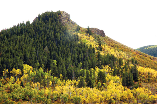 Truning aspens along a hillside gives Stagecoach area residents fall colors right out their windows.