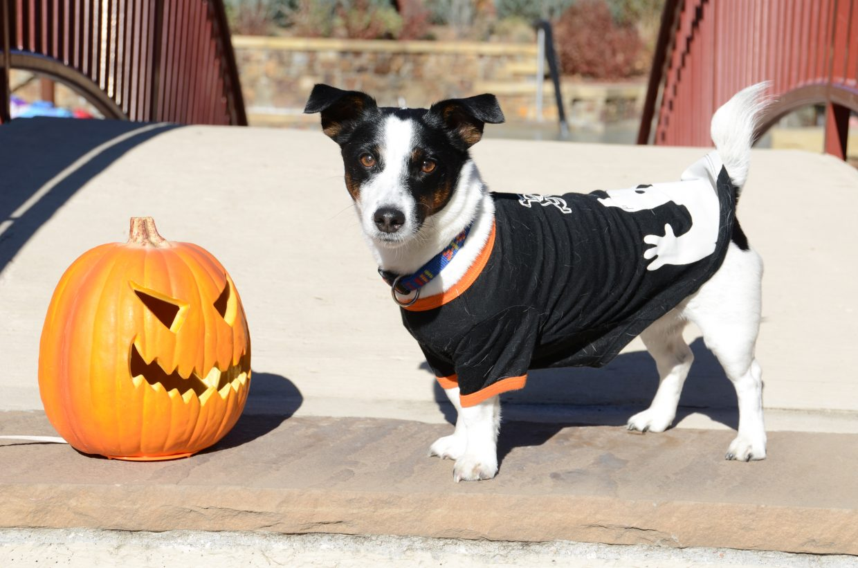 Gizmo from Old Town Hot Springs says Happy Howl-oween! Submitted by: Shannon Lukens