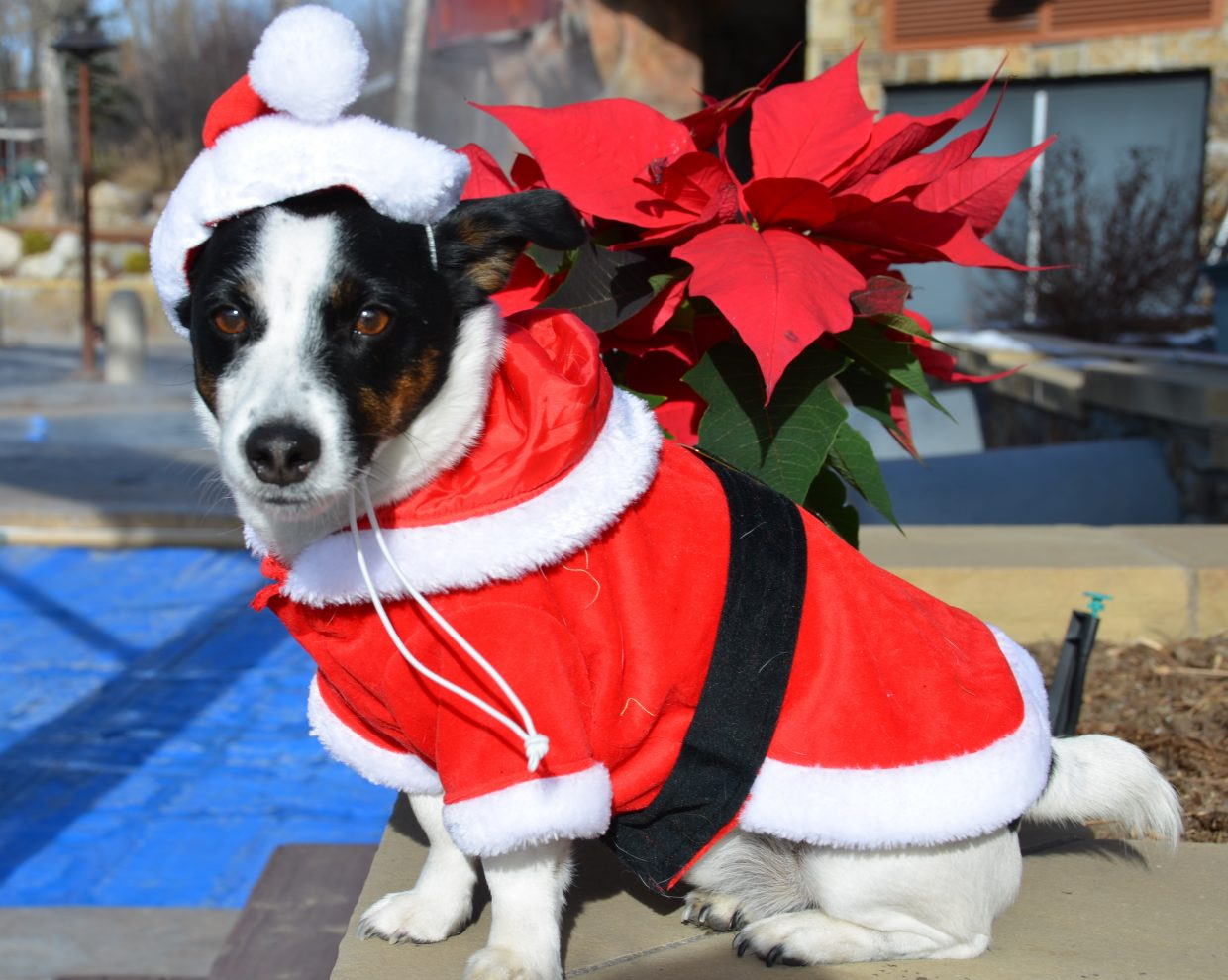 Happy Holidays from Gizmo at the Old Town Hot Springs. Submitted by: Shannon Lukens