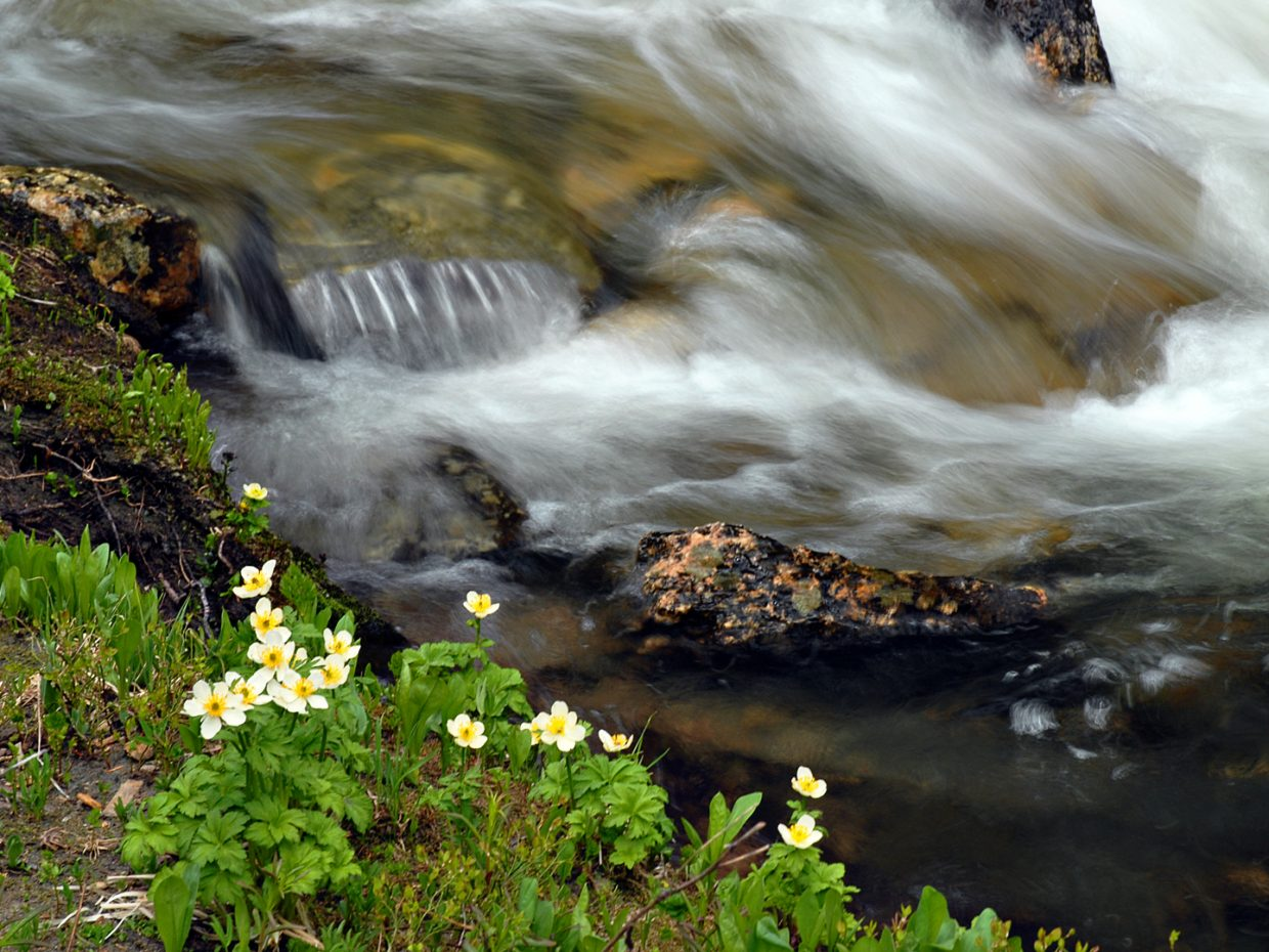Along Gold Creek in the Mount Zirkel Wilderness Area. Submitted by: Jeff Hall