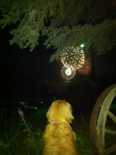 A Golden Retriever named Molly, enjoys the fireworks in Steamboat Springs on Monday.