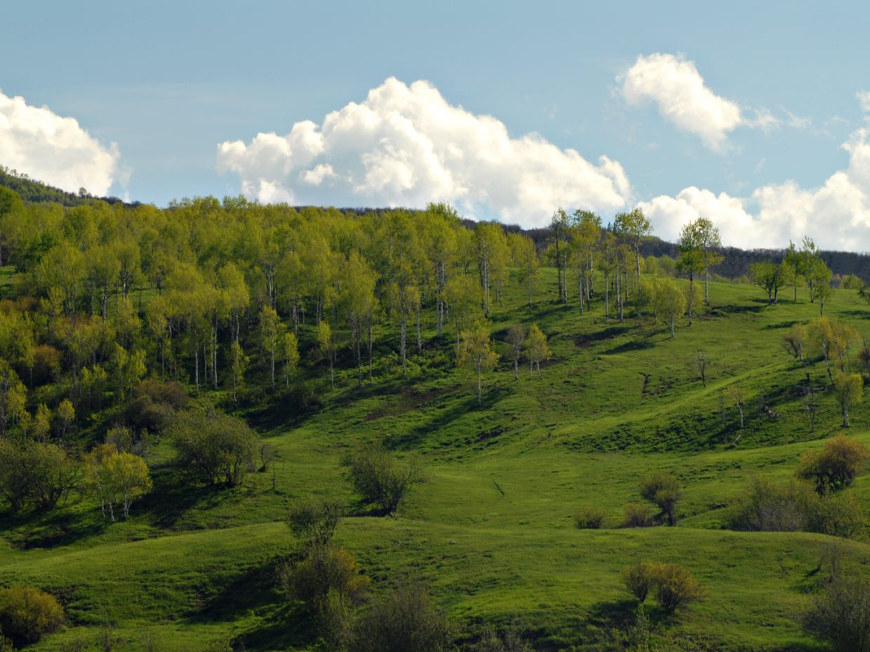 Spring greening in Steamboat. Submitted by: Jeff Hall