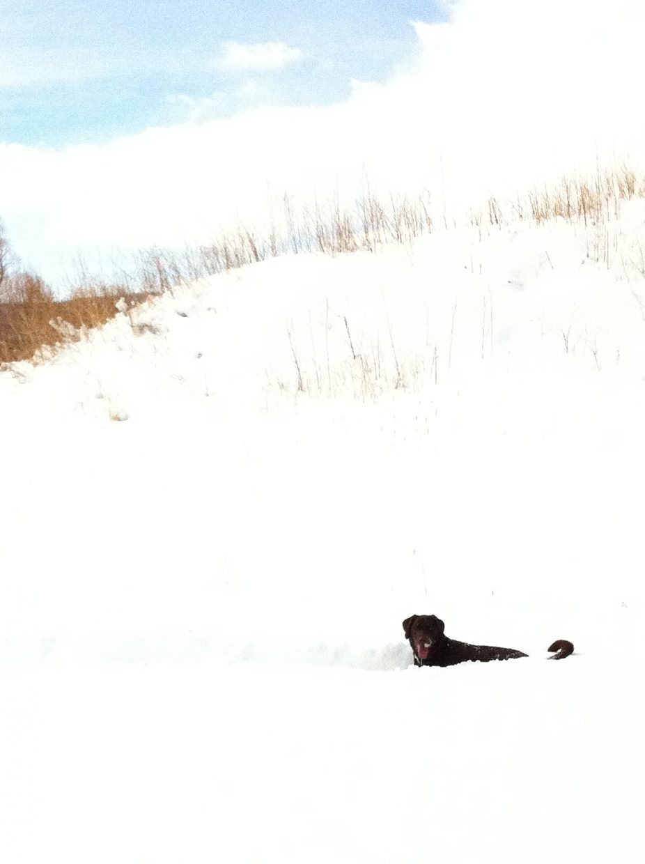 Monday afternoon when the blue sky came out, my chocolate Labrador Gus was in heaven swimming in the deep snow playing fetch with his ball. Submitted by: Debra Gatton