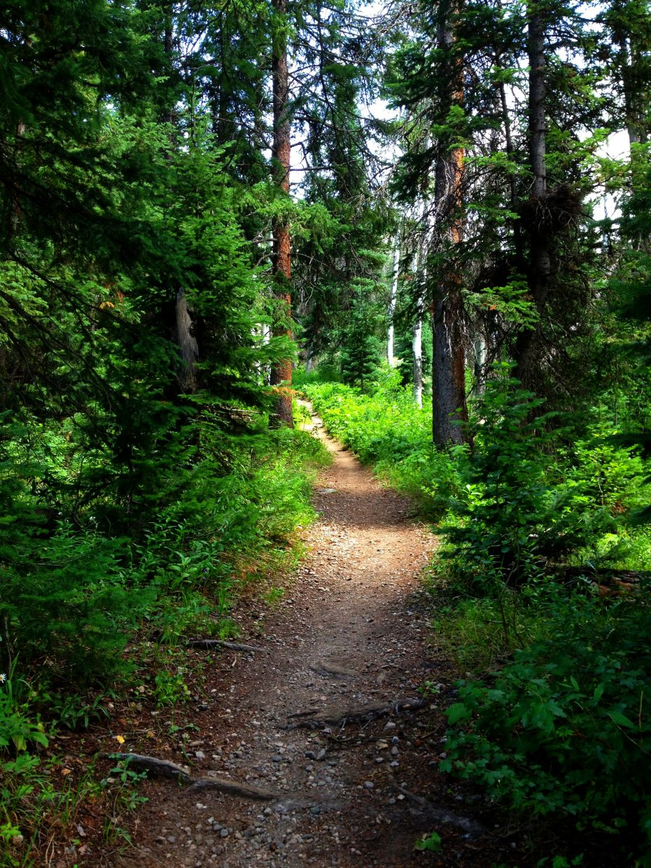 Hiking trail in the Zirkels. Submitted by Verleen Tucker.